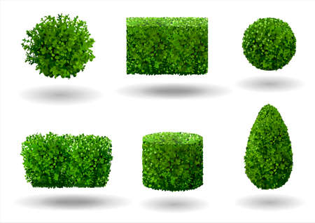 Conjunto de árboles y plantas ornamentales para jardinería. Gráficos vectoriales. Boj, hibisco y arborvitae.
