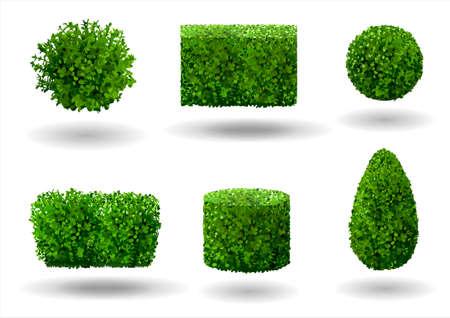 Zestaw roślin ozdobnych i drzew do kształtowania krajobrazu. Grafika wektorowa. Drzewo bukszpanu, hibiskusa i arborvitae.