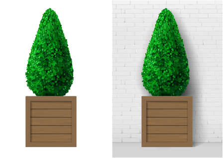Bush plant in modern wooden pot Stock Illustratie