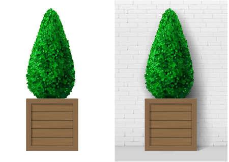 Bush plant in modern wooden pot Illustration