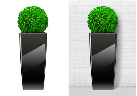 Bush plant in modern black pot. Decorative evergreen plant in a garden pot in vector graphics on a white background