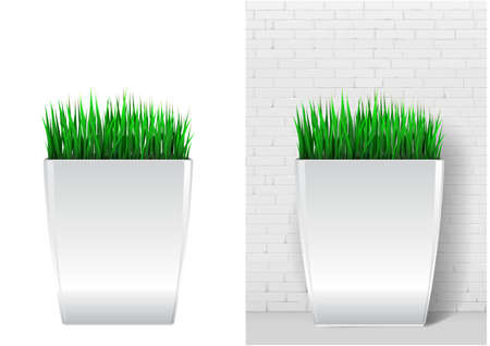 Grass plant in modern white pot. Decorative evergreen plant in a garden pot in vector graphics on a white background
