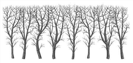 Buisson d'hiver sans feuilles
