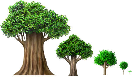 Set of different oak trees growth stages