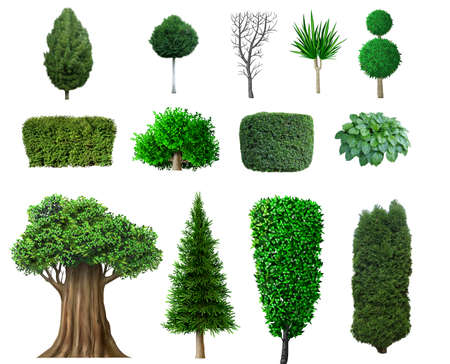 Set of ornamental plants and trees for landscaping. Boxwood, hibiscus and arborvitae tree. Stok Fotoğraf