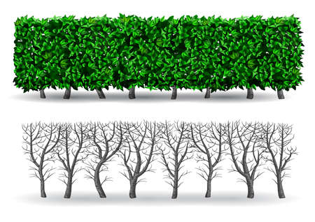 Bush in the form of a green hedge. Ornamental plant. The garden or the Park. Set of fences. Vector graphics Çizim