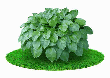 Green decorative realistic bush on the flower bed Vettoriali