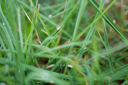 Green grass with a spider. Close-up