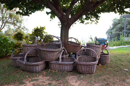 Empty wooden baskets for harvest under a tree 写真素材
