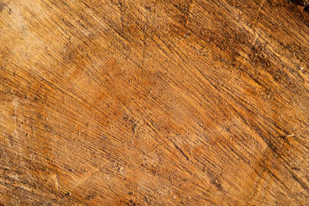 Slice of wood timber natural background.