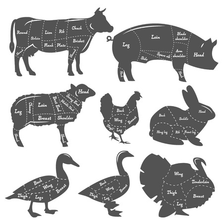 Set of vintage diagram of meal cutting