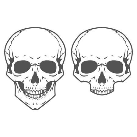 Two different skulls are on white background Vector