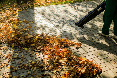 In the autumn park worker removes the road from the fallen leaves with help Stock Photo