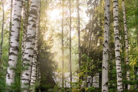 beautiful autumn forest in the haze. Sunlight Stok Fotoğraf