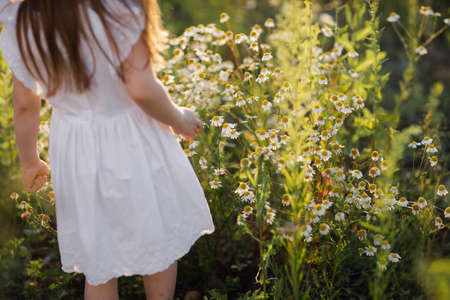 Little girl in flower fields, Outdoor portrait. field with daisies. Banco de Imagens
