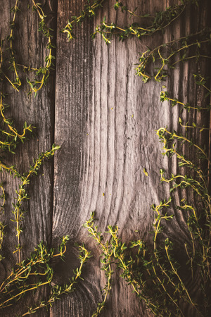 piquancy: Frame of the thyme sprigs on the wooden board vertical Stock Photo