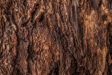 dint: Bark of tree background horizontal Stock Photo