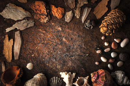 coral bark: Frame of shells , coral and stone on the dark background Stock Photo