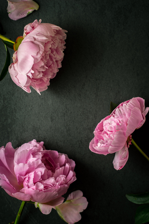 Peonies  on the black stone background top view Stock Photo
