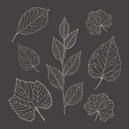 Set of vector outline leaves, hand-drawn lines