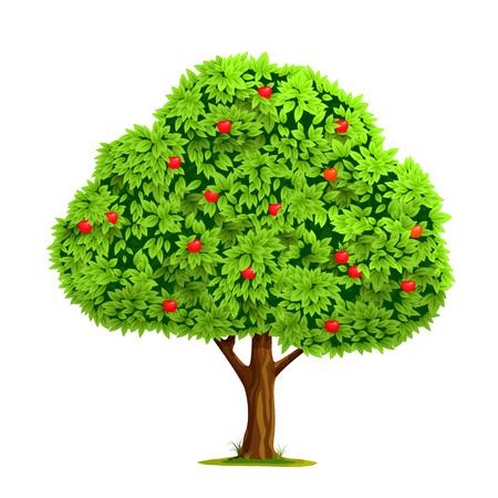 albero di mele: Albero di mele con la mela rossa isolato su sfondo bianco. Illustrazione vettoriale