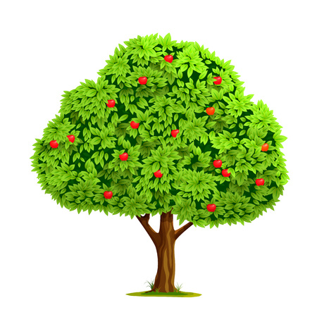 arbol de manzanas: Manzano con la manzana roja sobre fondo blanco. Ilustración vectorial