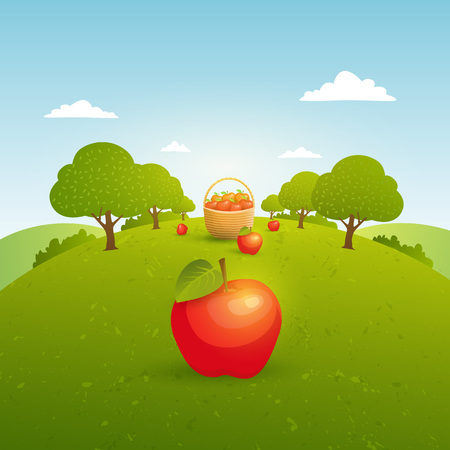 country farms: Landscape with apple garden. Harvest apples. Vector illustration Illustration