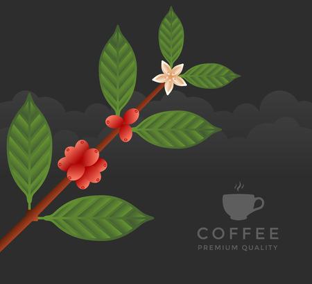 coffee tree: Coffee tree branch. Flat illustration. Ripe coffee Illustration