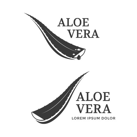 Aloe Vera label or logo vector illustration. Leaf Aloe Vera