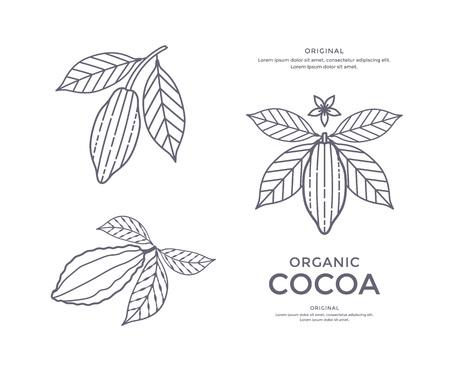 코코아 콩 아이콘
