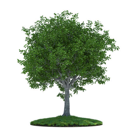 3d render of beautiful tree with green field  Isolated on white background photo