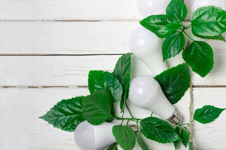 Energy saving light bulbs in green leaves. The concept of environmental protection and ecology