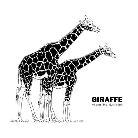 Two isolated Giraffe Line design. Vettoriali