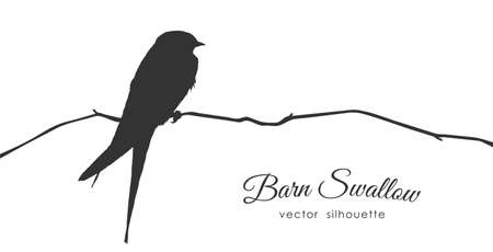Silhouette of Barn Swallow sitting on a dry branch.