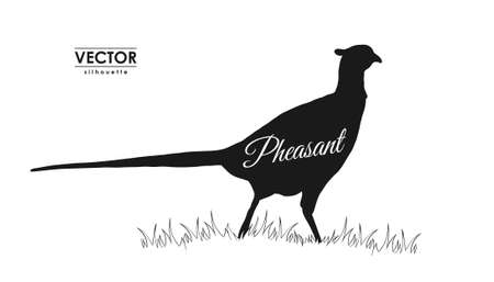 Silhouette of pheasant on grass 일러스트