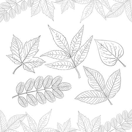 Set of hand-drawn leaves isolated on white background. Decoration for Autumn design. Sketch line style.
