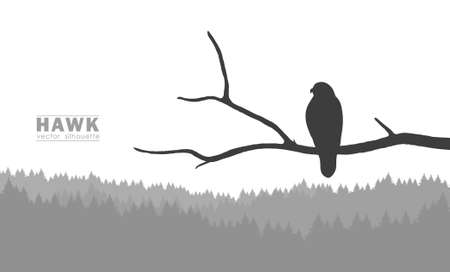 Vector illustration: Silhouette of Buzzard sitting on a dry branch in a forest