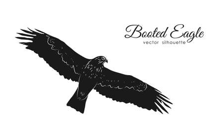Vector illustration: Black silhouette Booted Eagle in fly isolated on white background.