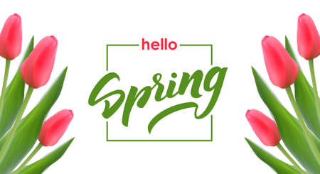 Vector illustration: Template design of greeting card with Tulips and handwritten elegant brush lettering of Hello Spring on white background.