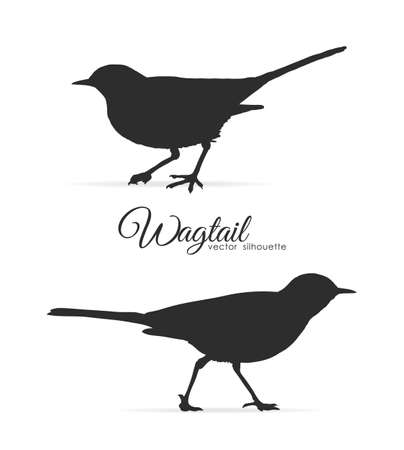 Vector illustration: Silhouette of Wagtail on white background Иллюстрация