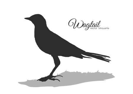Vector Silhouette of Wagtail on white background