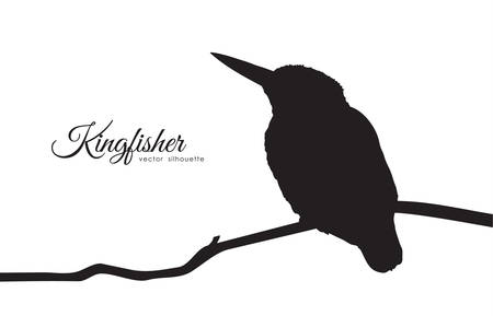 Vector illustration: Silhouette of Kingfisher sitting on a branch.
