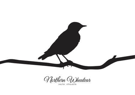 Silhouette of Northern Wheatear sitting on a dry branch.