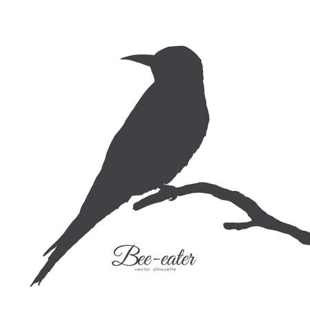 Vector illustration: Silhouette of Bee-eater sitting on a dry branch.