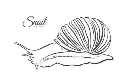 ベクトルイラスト:カタツムリの手描きのスケッチ。