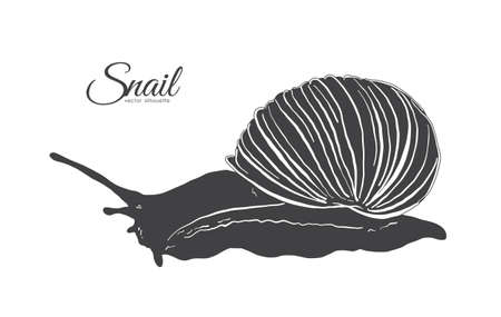 Hand drawn silhouette of snail vector illustration.