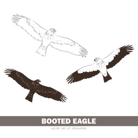 Vector illustration: Set of silhouettes Booted Eagle in fly.