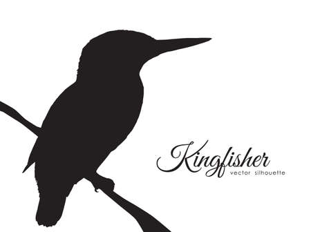 Vector illustration: Silhouette of Kingfisher sitting on a dry branch.