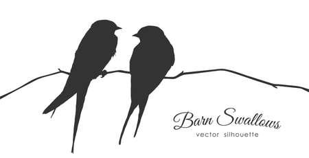Illustration vectorielle: Silhouette isolée de deux hirondelles rustiques assises sur une branche sèche sur fond blanc.