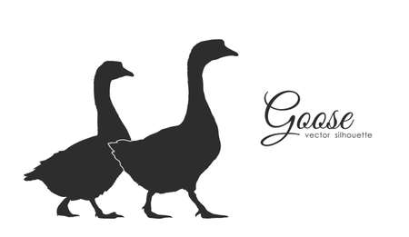 Isolated silhouette of couple geese on white background. Illustration